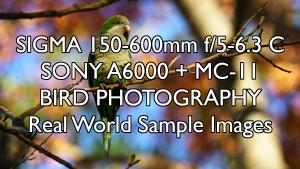 SIGMA 150-600mm f5-6.3 C SONY A6000  MC-11 Bird Photography Real World Sample Images